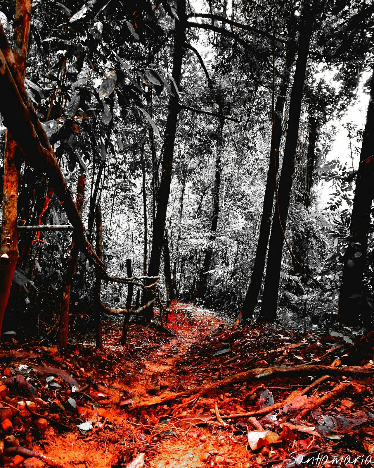 Fear?? Follow your instincts... Tree Forest Beauty In Nature WoodLand Nature Good Morning Tranquility Good Day Costa Rica Pura Vida ✌ Costa Rica Y Su Naturaleza Tranquil Scene Enjoying Life Mountain Orange Color Nature Is Art Vibrant Color