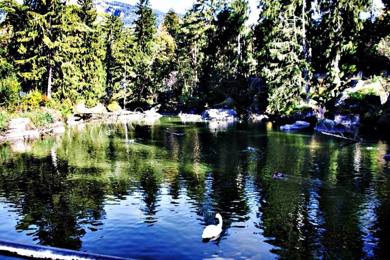 Tierpark Goldau Tierpark Goldau Schweiz