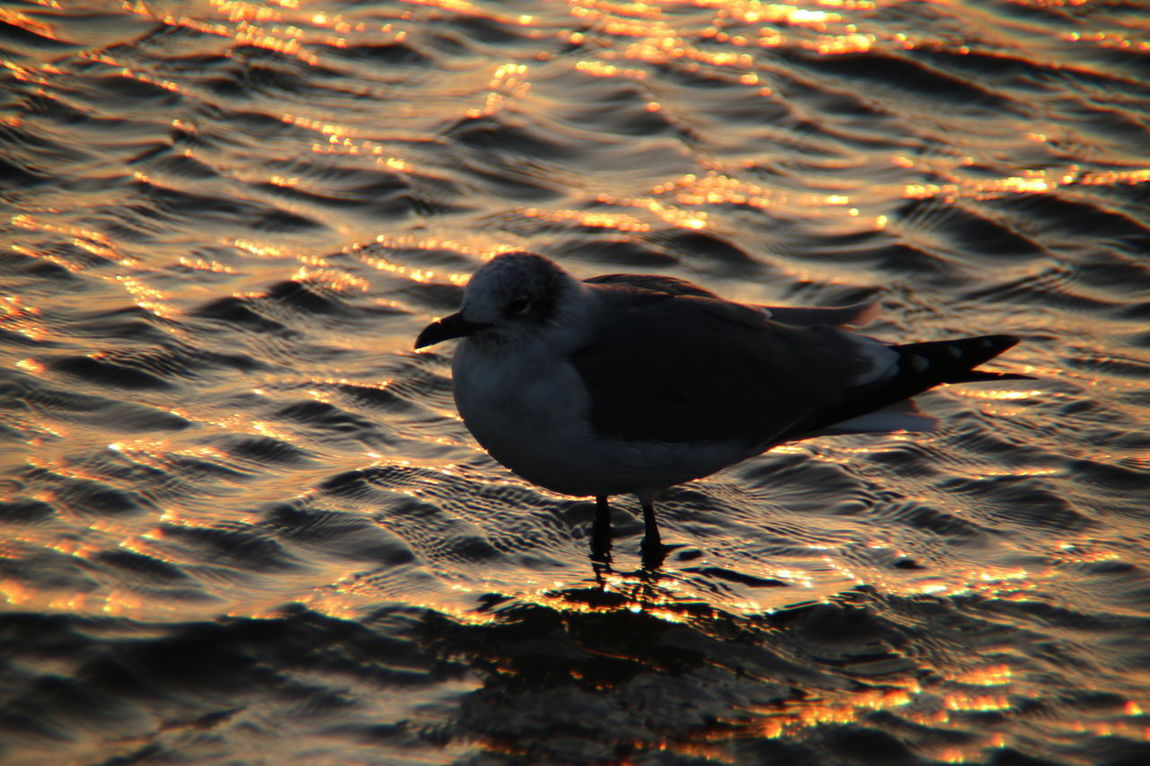 Bird One Animal Animals In The Wild Animal Wildlife Sunset Water Animal Themes No People Lake Nature Outdoors Close-up Day Animal Abstract Abstract Nature