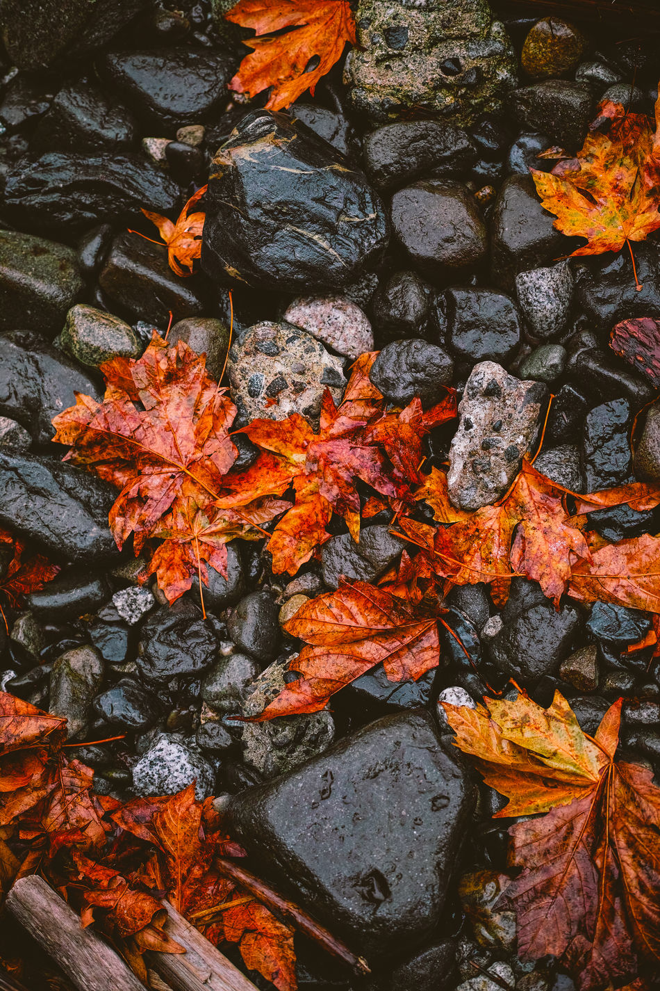 Stanley Park (Vancouver, Canada) Autumn Autumn Colors Dp23 Leaves Nature Rocks Sigma Stanley Park Streetphotography