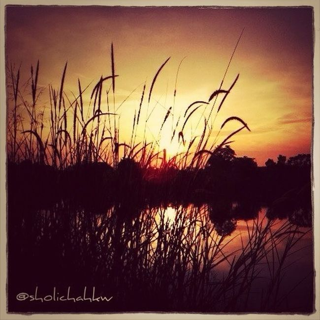 Sunsetlover