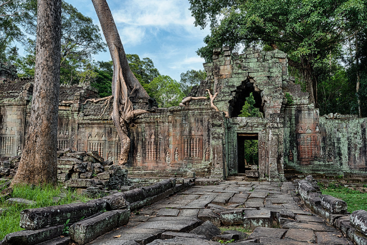 Ancient temple ruins at Angkor Archaeological Park. Siem Reap, Cambodia Ancient Architecture Ancient Civilization Ancient Culture Ancient Hindu Temple Ancient History Ancient Ruins Cultures Figtree Khmer Empire No People Outdoors Strangler Fig Tourism Tourist Attraction  Travel Destinations Tree UNESCO World Heritage Site