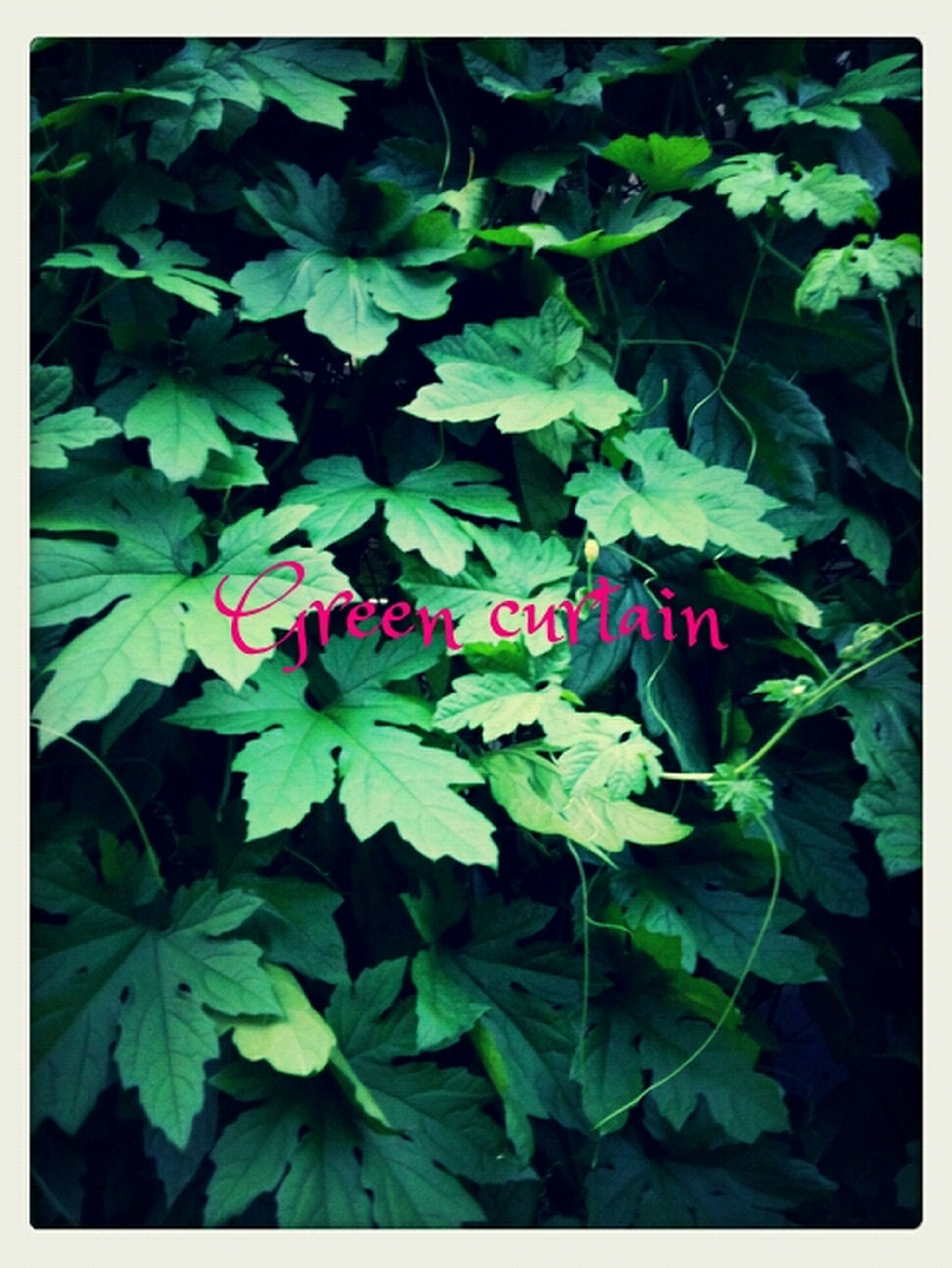 transfer print, leaf, auto post production filter, growth, green color, plant, nature, close-up, full frame, backgrounds, beauty in nature, green, freshness, high angle view, leaves, no people, outdoors, day, fragility, leaf vein