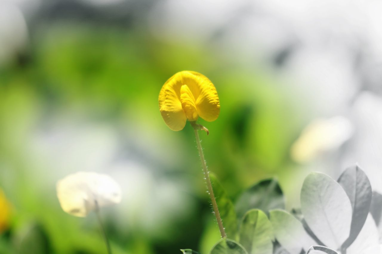 Nature Yellow Fragility Beauty In Nature Flower Growth Close-up Freshness Plant Outdoors No People Day Flower Head