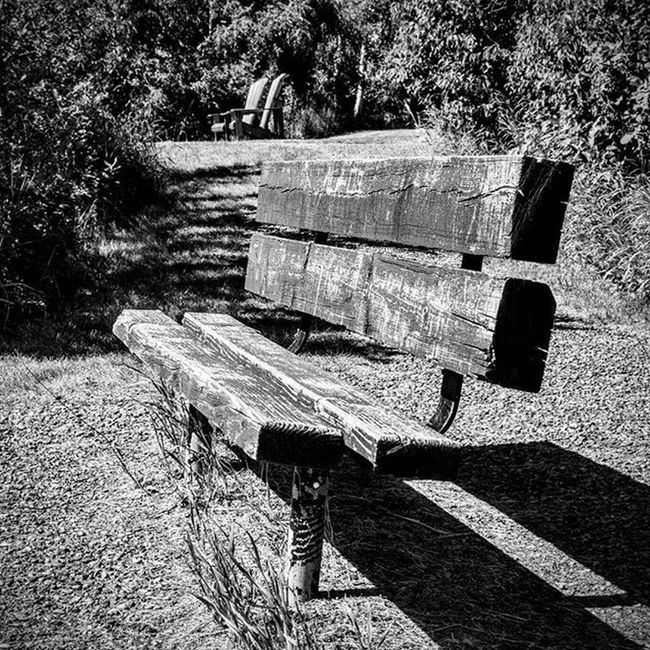 Bench left to rot by the people who once sit and share their life experiences!