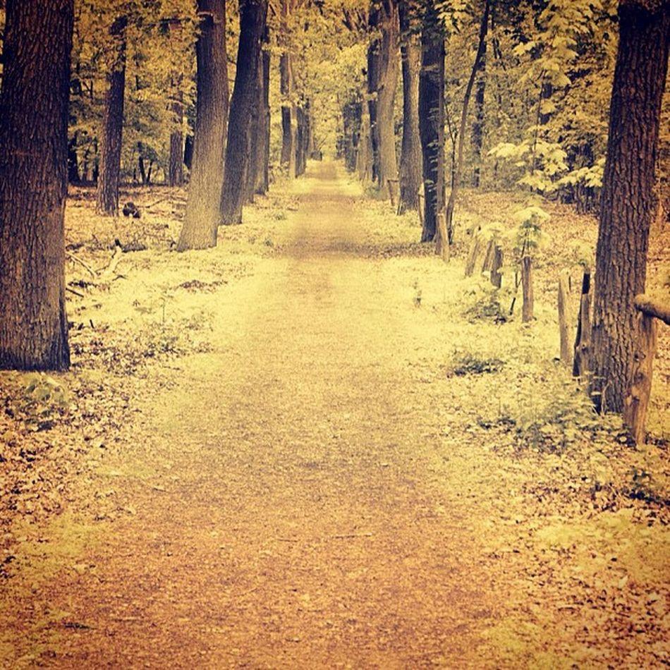 Way Way Weg Wonderful Baum Bäume Endlos Wood Berlin Wald Trees Tree Endless Nice Awesome
