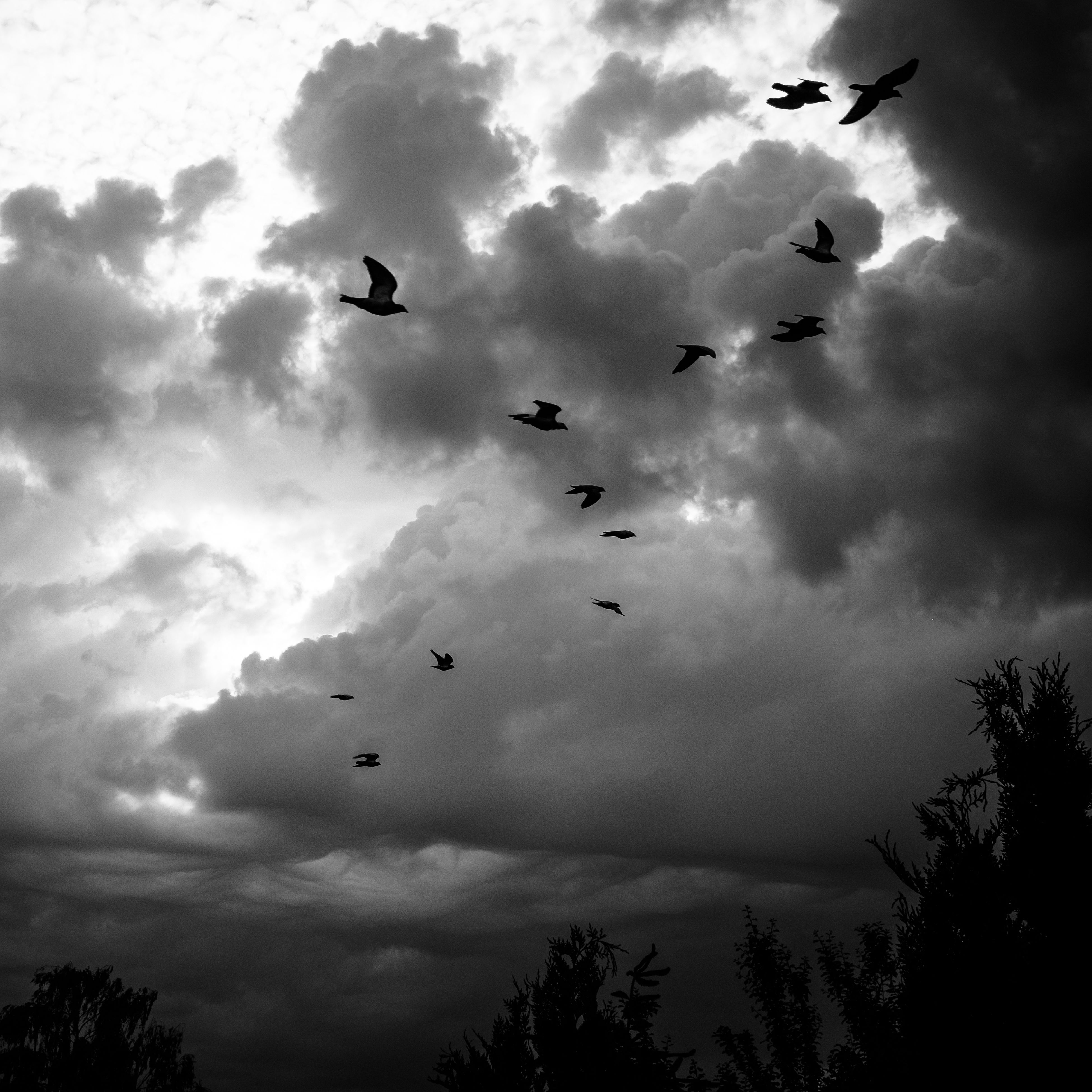 flying, bird, animal themes, cloud - sky, mid-air, sky, large group of animals, flock of birds, animals in the wild, low angle view, no people, nature, outdoors, silhouette, spread wings, migrating, animal wildlife, togetherness, beauty in nature, storm cloud, day