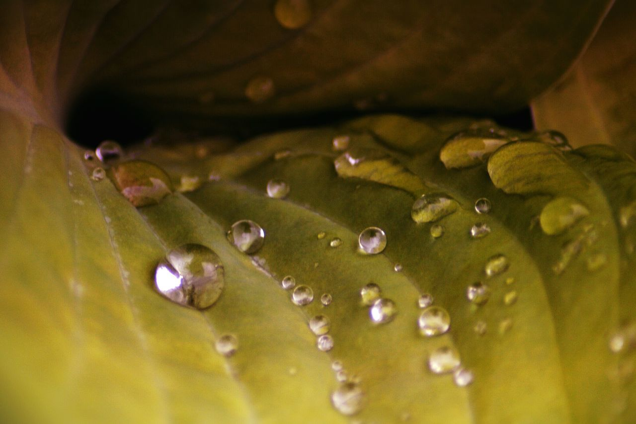 Nature Drop Water Beauty In Nature Close-up Freshness No People Fragility Leaf Plant Outdoors Rain Drop Rain Drops On Leaves