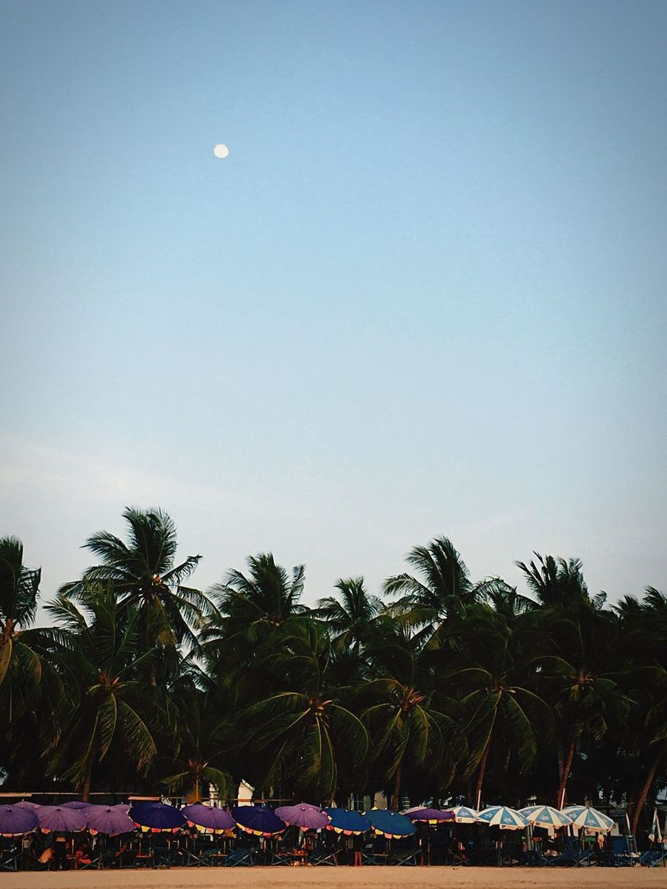 Palm Tree Copy Space Tree Nature Sky Moon Low Angle View Beach Outdoors Clear Sky Scenics Beauty In Nature No People Day Sand Chilled Lazy Day Moonrise Timeless Thailand Thai Culture