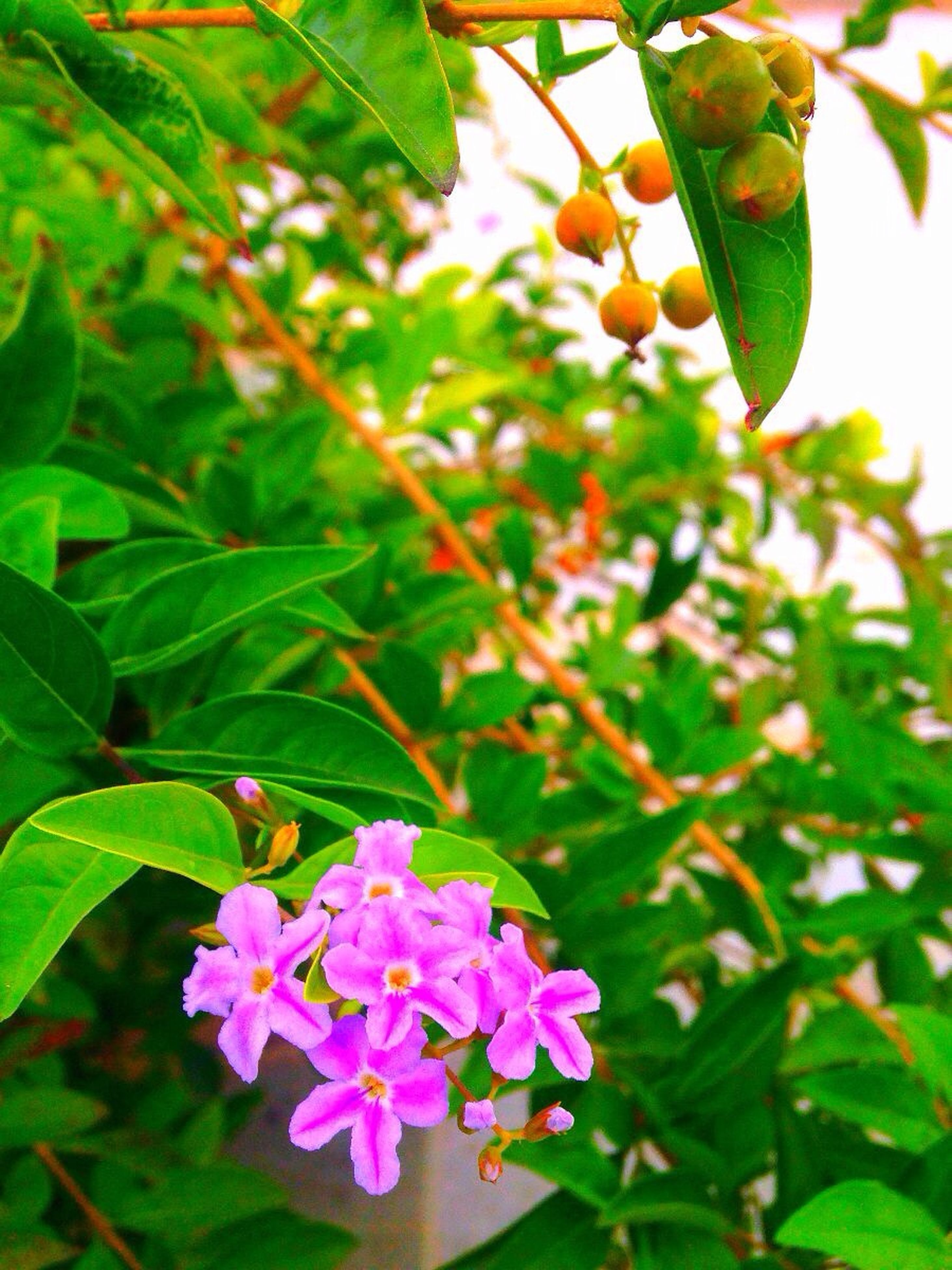 flower, freshness, growth, leaf, fragility, petal, beauty in nature, nature, flower head, plant, blooming, focus on foreground, close-up, green color, pink color, blossom, in bloom, branch, insect, day