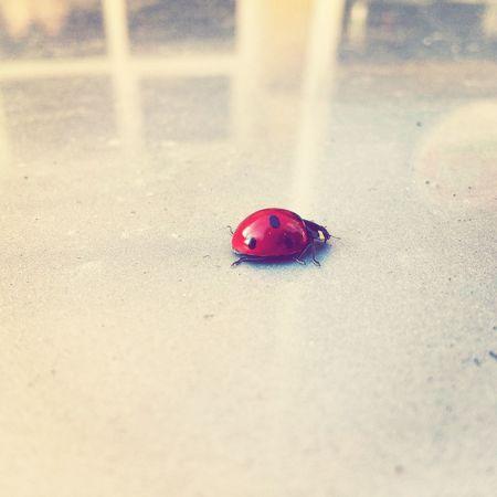 Ladybird Nature Nature_perfection EyeEm Nature Lover EyeEm EyeEm Best Shots Sektör Yapım Adana Turkey Uzun Ince Bir Yoldayım