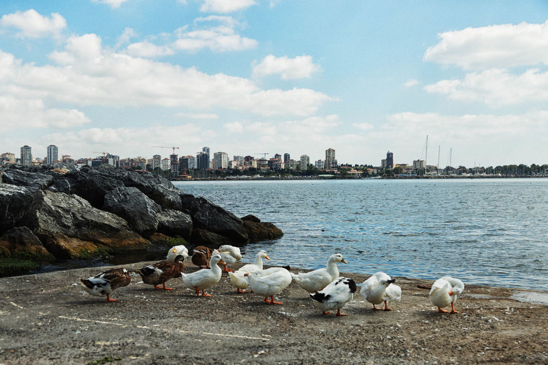 Waterfront Bird City Cityscape Cityscape Cloud Cloud - Sky Cloudy Day Ducks Feathers Istanbul, Turkey, Bosphorus, Sea, Europe, European, Asia, Asian, Country, Golden Horn, Bosphorus, Bosphorous Straights, Lakeshore Marmara Sea Nature No People Outdoors Rocks And Water Sky Sky And Clouds Water