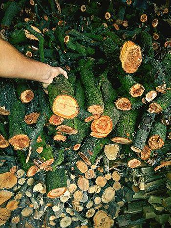 Hands At Work Woods Wood Woodwork  Cut Wood Woodworking EyeEm Gallery EyeEm Best Shots Woodworker