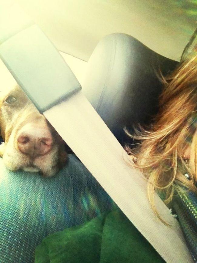 November 2013 Backseat Diaries