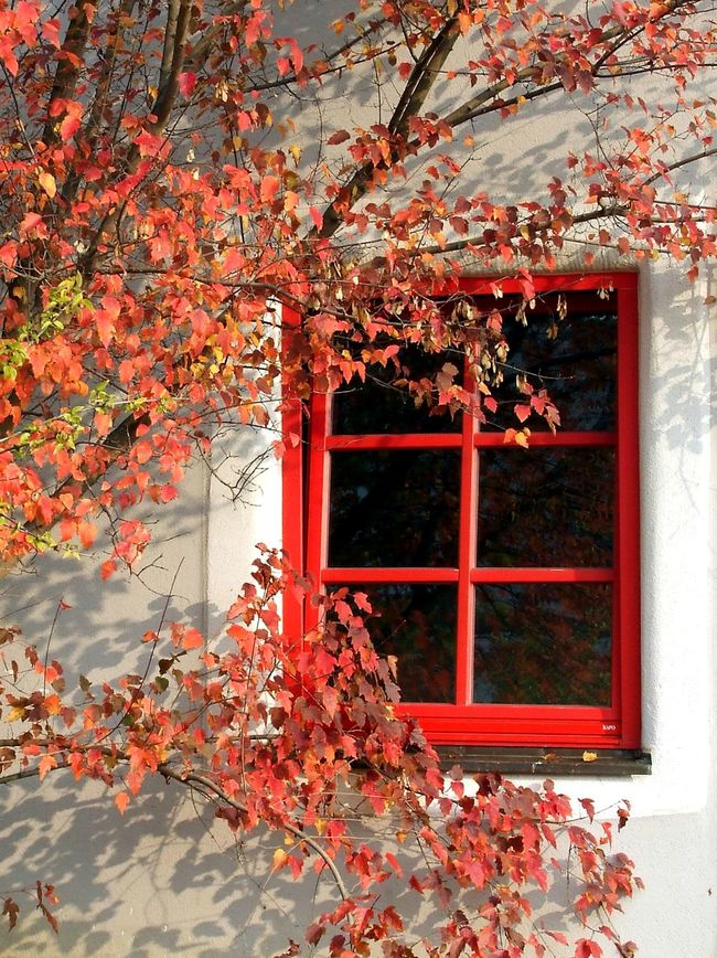 Window Architecture Built Structure Red Branch Building Exterior Tree Leaf Autumn Outdoors Nature Colour And Patterns