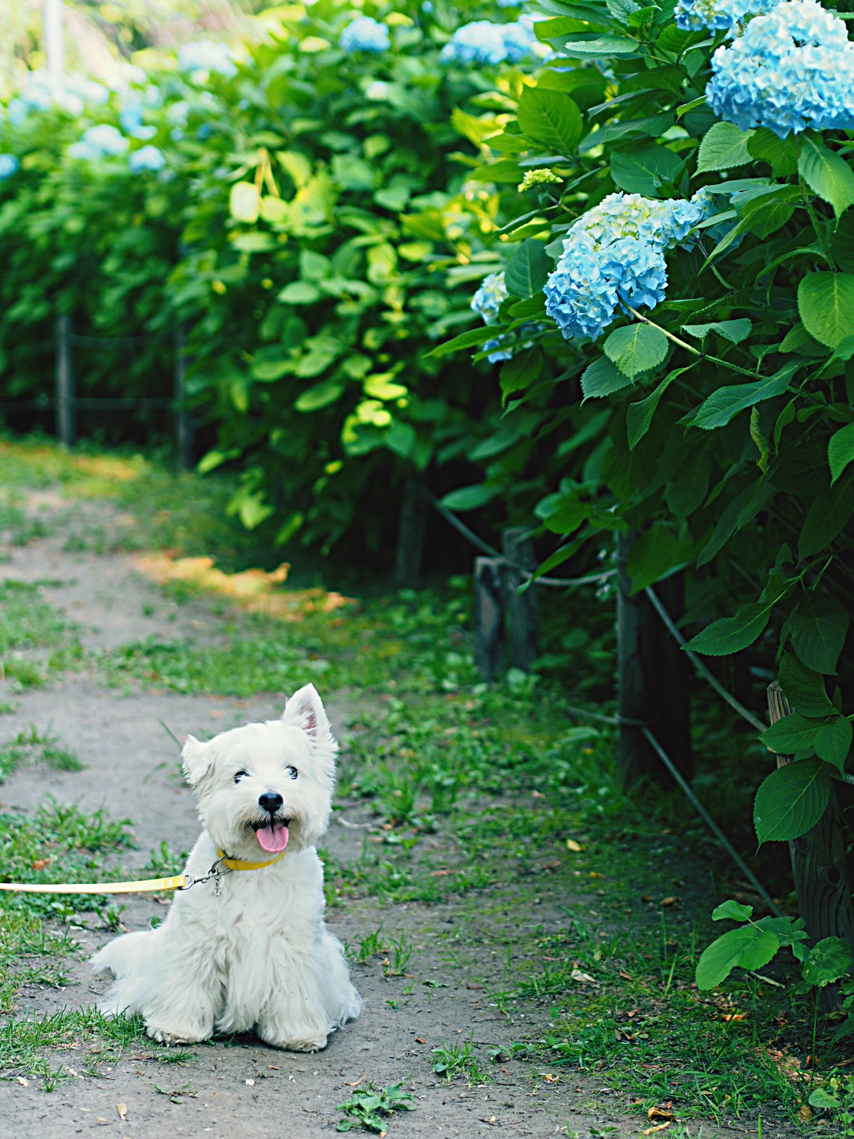 animal themes, one animal, domestic animals, white color, pets, plant, growth, grass, green color, mammal, flower, front or back yard, nature, park - man made space, dog, field, leaf, outdoors, day, domestic cat