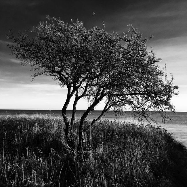 Trees Shootermag AMPt_community Seaside NEM Landscapes The Great Outdoors - 2015 EyeEm Awards Black And White Minimalism Blackandwhite Moon