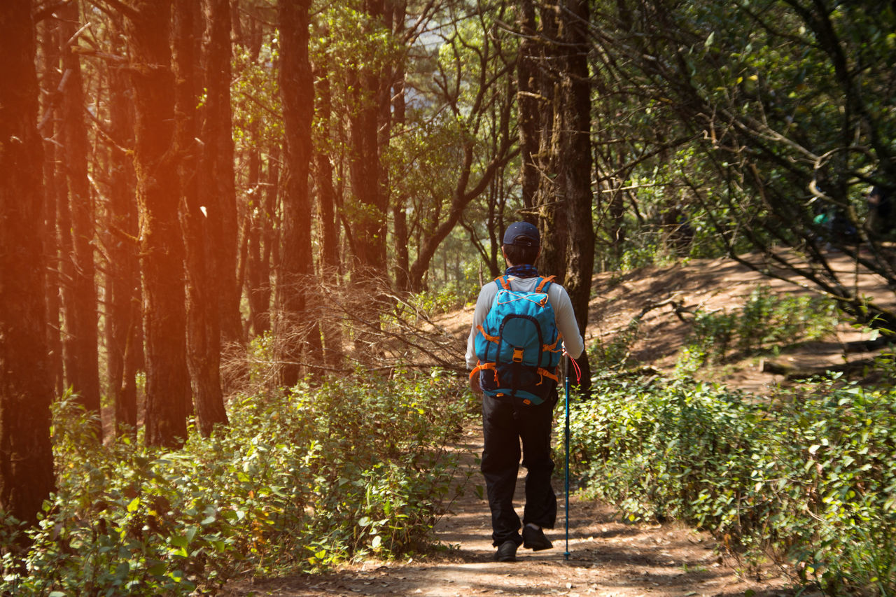 Adult Adults Only Day Forest Full Length Headwear Healthy Lifestyle Hiking Leisure Activity Lifestyles Men Nature One Man Only One Person Only Men Outdoors People Rear View Standing Tree