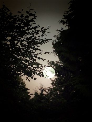 Goodnight Moon. Full Moon Goodnight Moon EyeEm Best Shots Eye Em Nature Lover