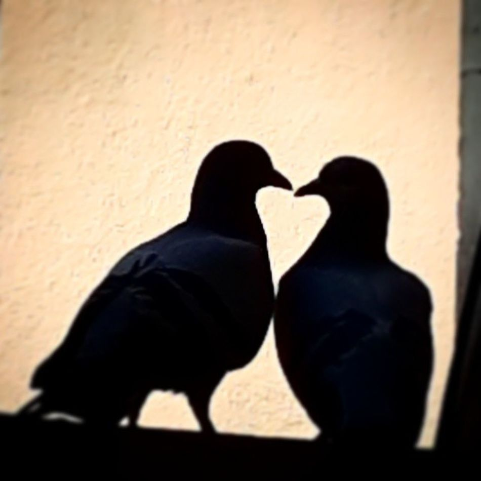 That moment when you realise.... well never mind. -_- 222Post Foreveralone 😞 Almostperfect Pigeons Follow #f4f #followme #TagsForLikes #TFLers #followforfollow #follow4follow #teamfollowback #followher #followbackteam #followh Awesome_shots #photoedit #photowall #picoftoday #photooftheday #ipopyou #instagamous #beautiful #instagramhub #igaddict #jj_for Likeforlike #likemyphoto #qlikemyphotos #like4like #likemypic #likeback #ilikeback #10likes #50likes #100likes #20likes #likere
