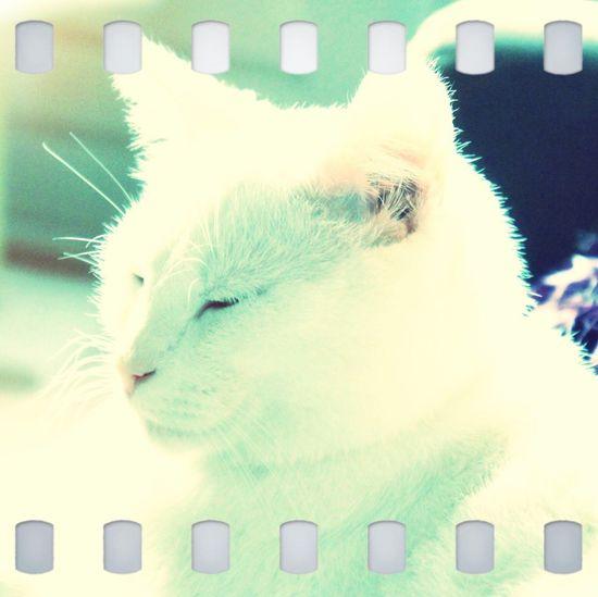 Love Cats Friend Beatiful Love Cats