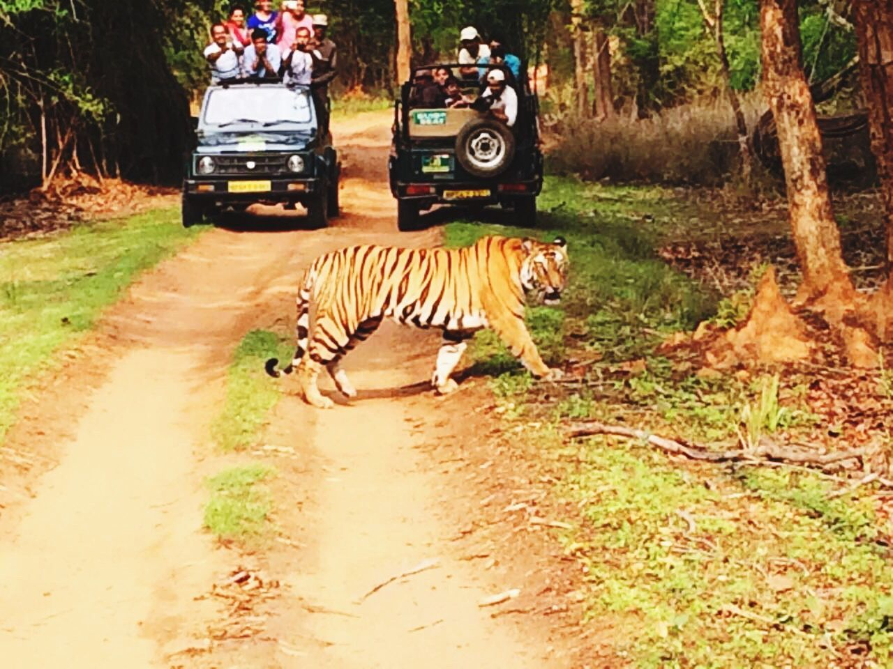 Original Experiences Wildlife Photography Awesome Animals Majestic Big Cat Feline Forest Jungle Wild Wildlife Nationalpark Wildlife & Nature Bandhavgarh National Park Incredible India Incredibleindia Save Tigers Tiger Tigers My Favorite Picture  India EyeEm Best Shots Eye4photography  Thriller