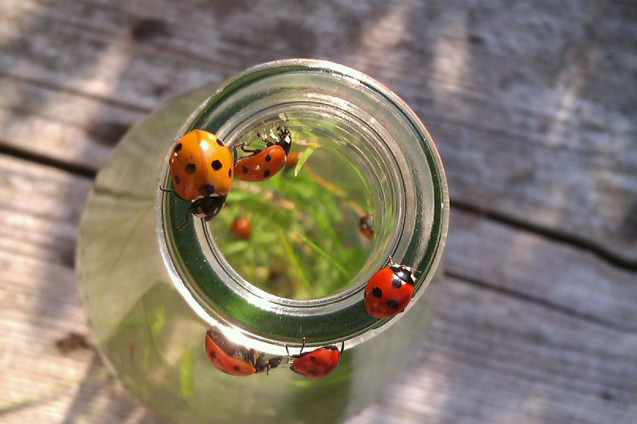 4 years ago. August 2012. Taken with HTC Wildfire S Marienkäfer Ladybugs Original Photography Smartphone Photography Tiny Ladybirds Animal Themes Circle Nature Life Colorful Red And Green Sunlight