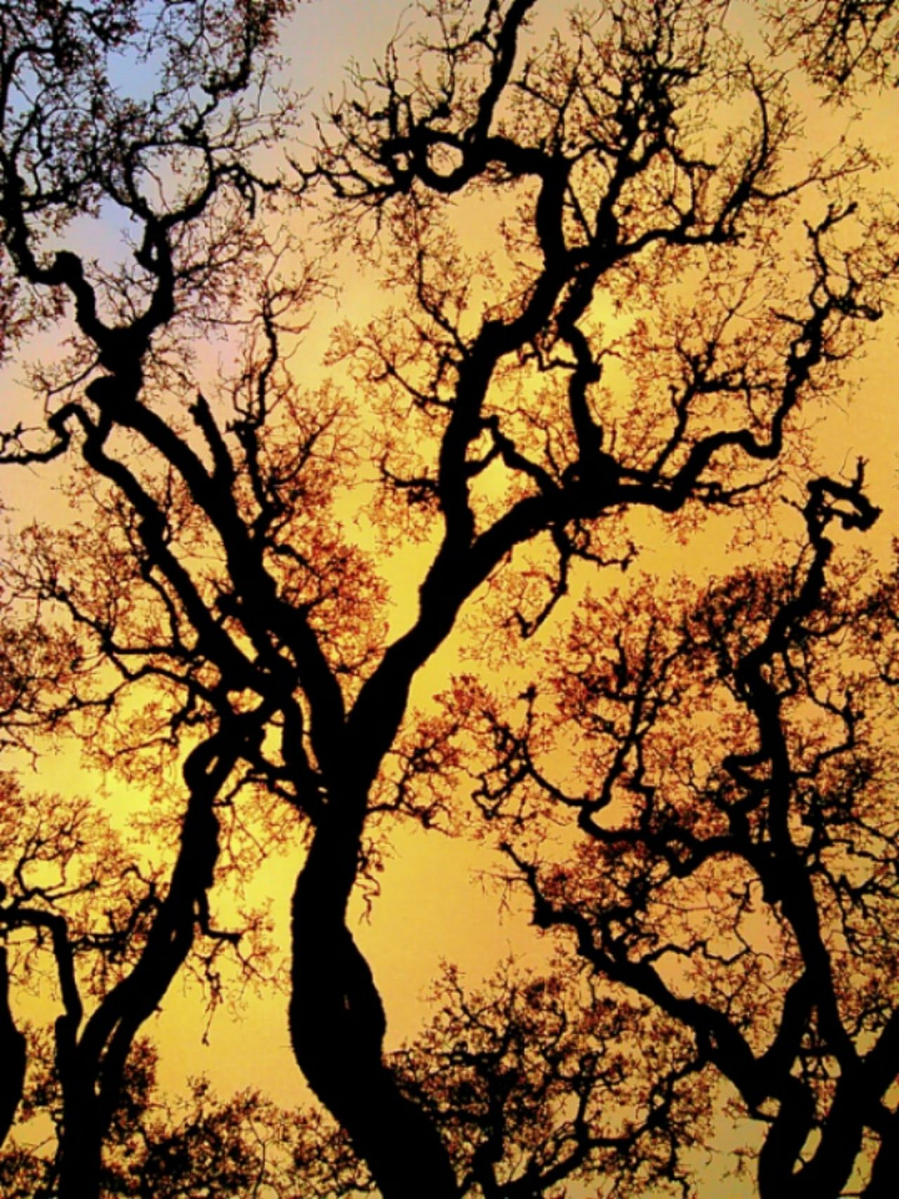 Pivotal Ideas Tree Hillsborough, Ca Perspectives On Nature