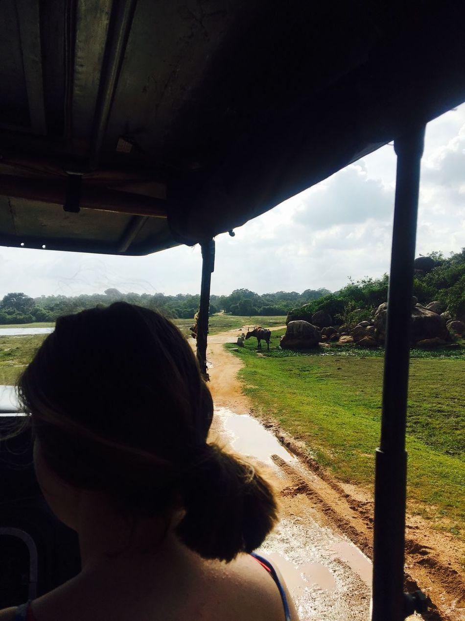 2/3 jeepsfari på savannen