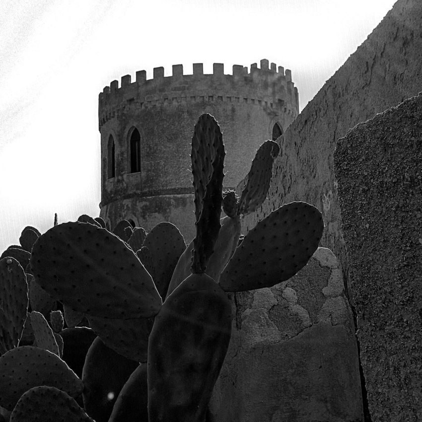 Ancient Arch Architecture Blackandwhite Built Structure Day Growth History Italia Italy Low Angle View Nature No People Outdoors Puglia Salento Sky The Past Torre Tourism Tower Travel Destinations