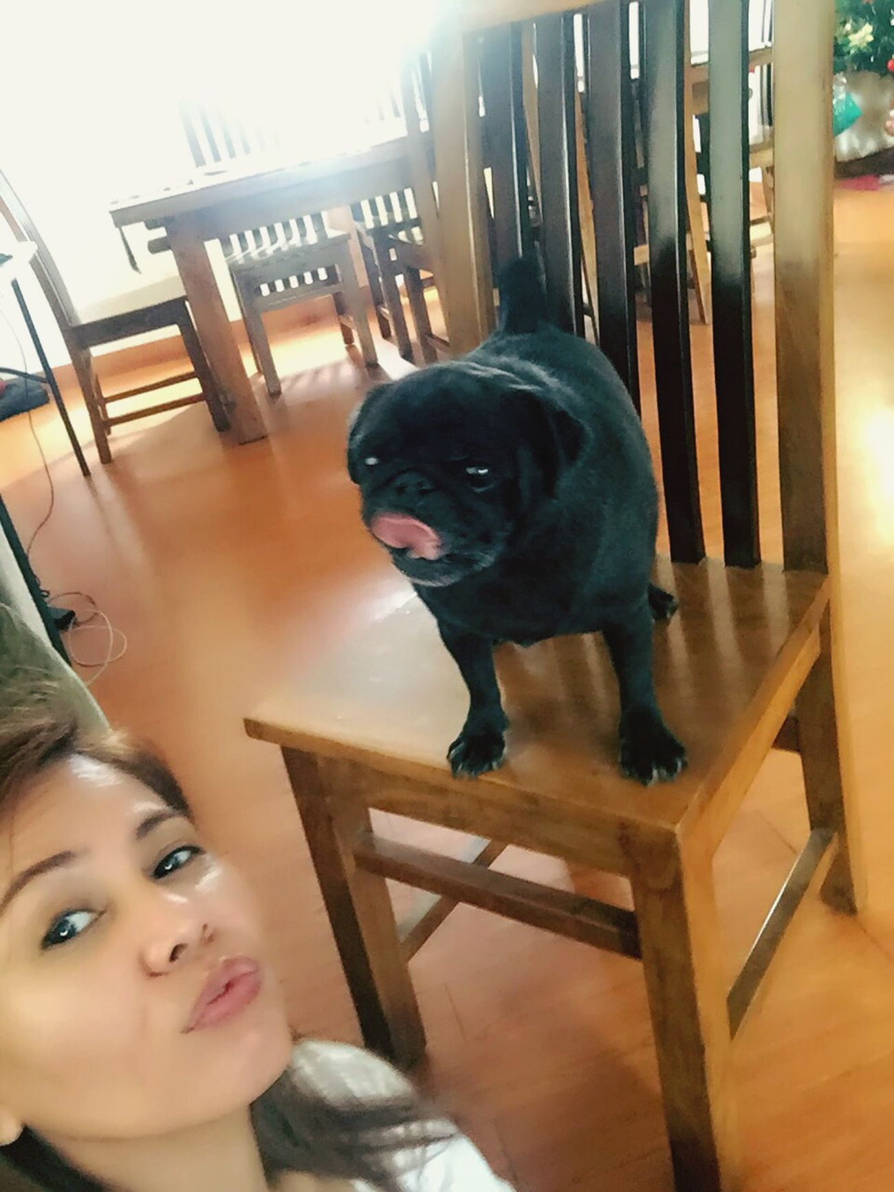 Our 7 yrs old Pug, Poleng... 🐶