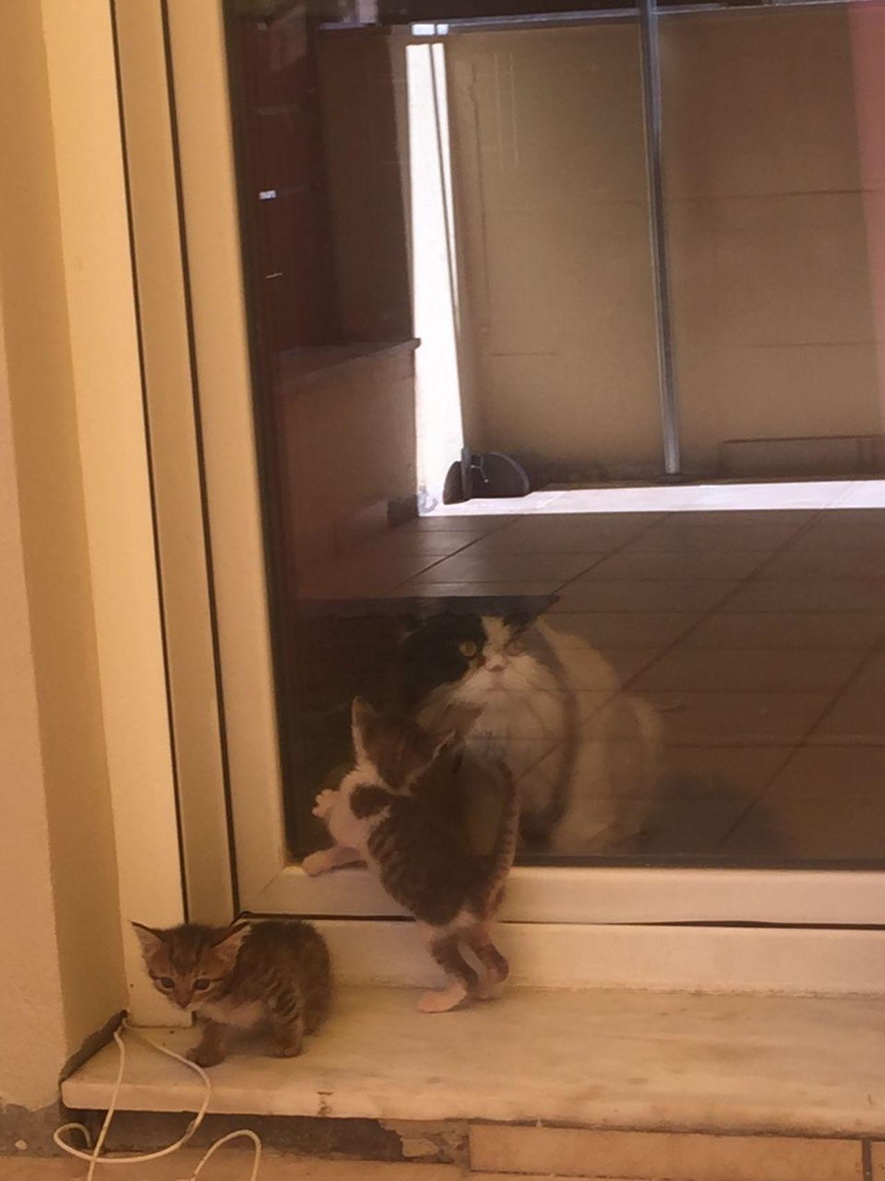 Babycat Cat Window Pets No People