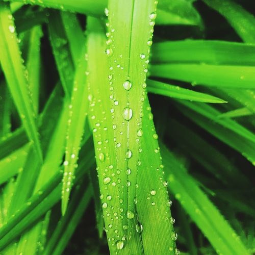 Green Color Nature Grass Freshness Water No People Nature Atmosphere Rainy Wet Grass Wet Plants Green