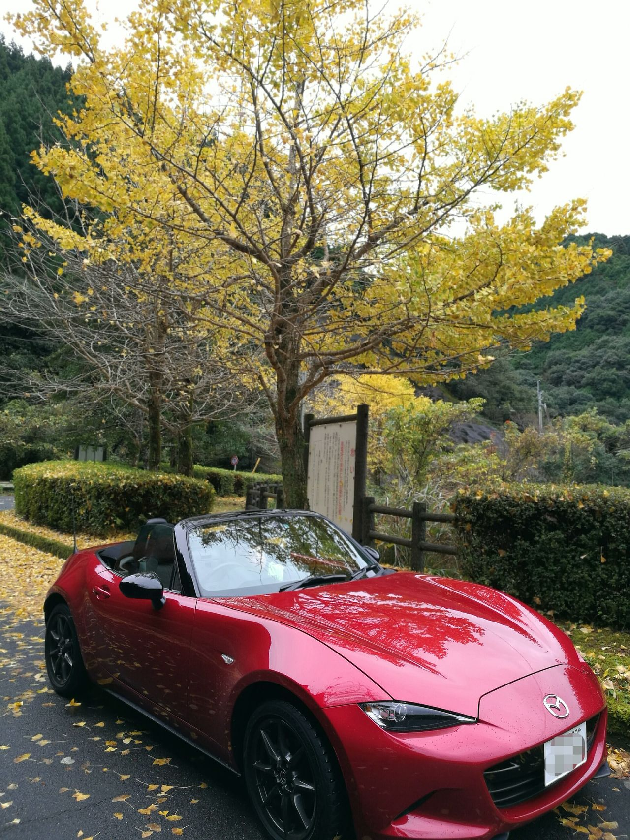 Car Tree Transportation Mode Of Transport Red Land Vehicle No People Nature Day Outdoors Racecar Motorsport Nature Autumn Trees Reaf Beauty In Nature Mazda MX-5 Mx5 Miata マツダ ロードスター Roadster