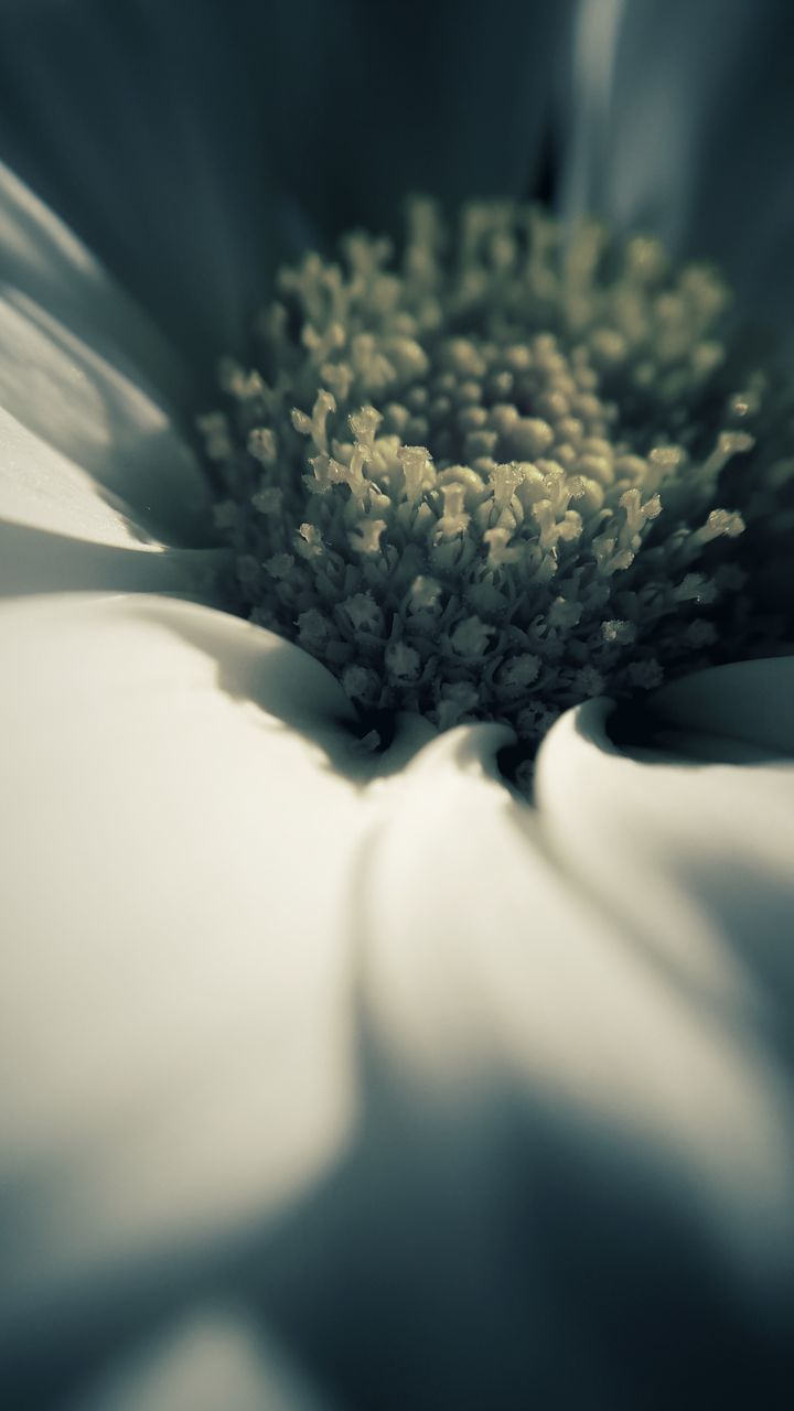 selective focus, flower, close-up, fragility, no people, nature, freshness, growth, day, indoors, beauty in nature, flower head