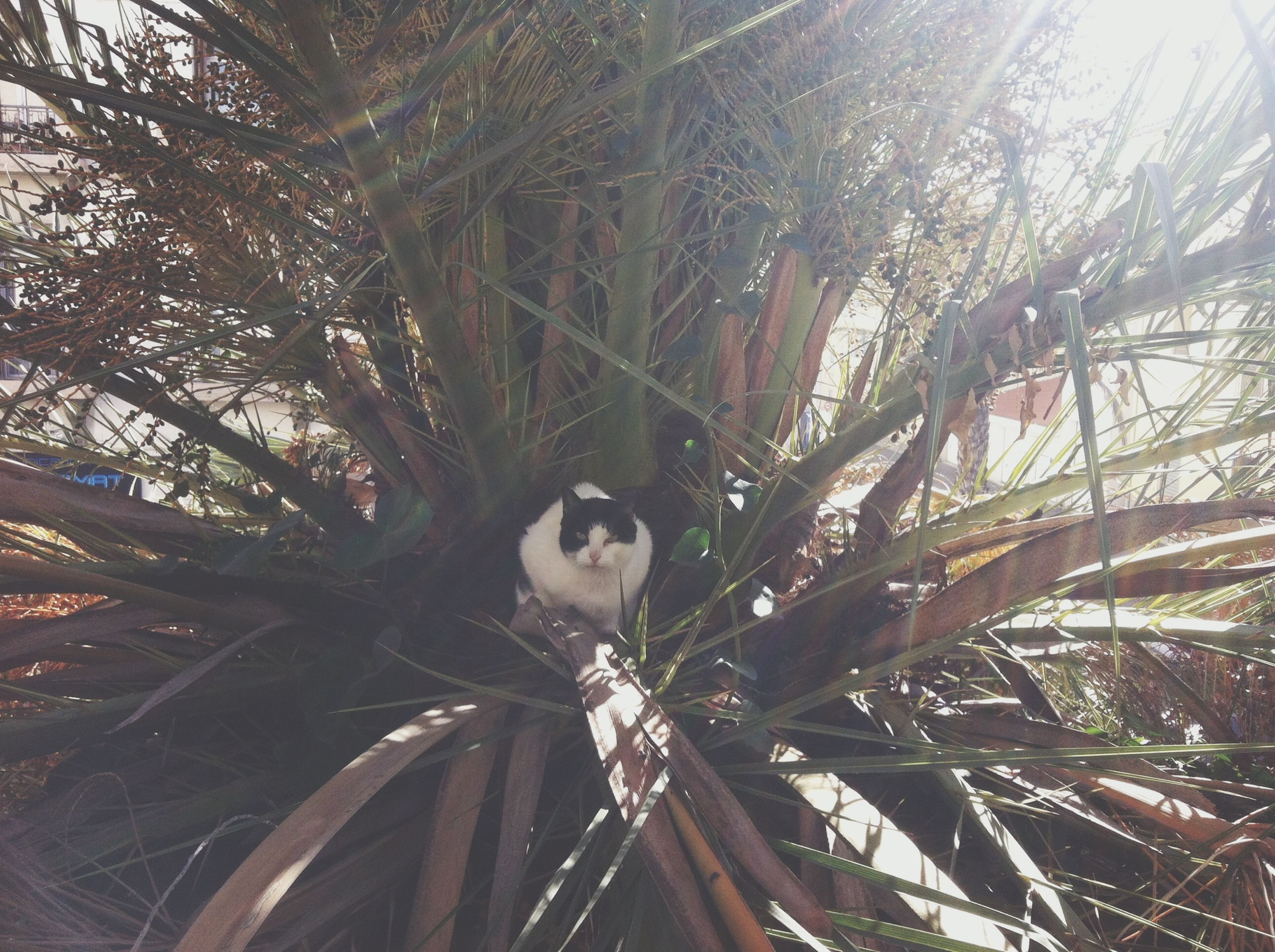 tree, low angle view, one animal, branch, animal themes, tree trunk, looking at camera, growth, day, sunlight, nature, portrait, outdoors, mammal, front view, palm tree, one person, forest, sky