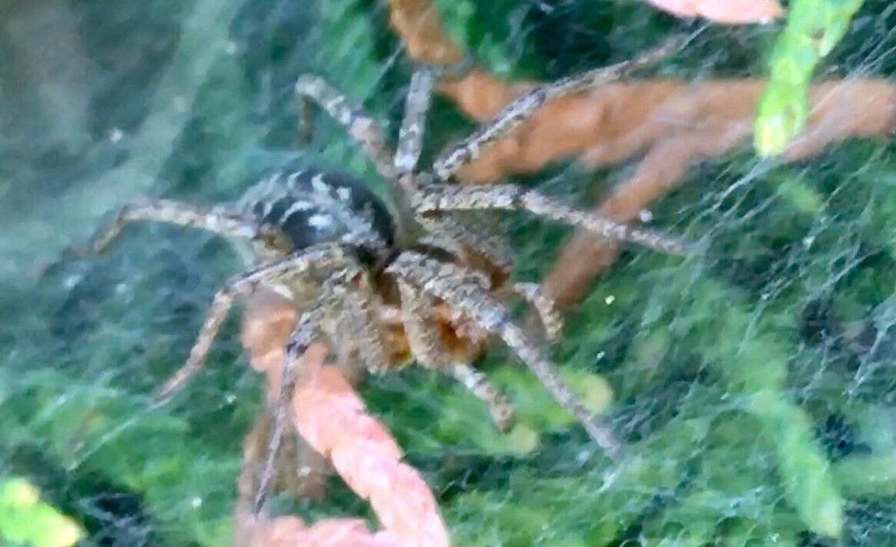 spider, animal themes, one animal, water, spider web, day, close-up, animals in the wild, nature, outdoors, no people