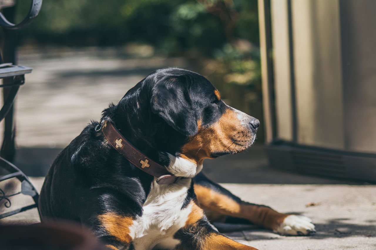 Animal Animal Head  Black Color Canine Carnivora Close-up Comfortable Day Dog Domestic Animals Focus On Foreground Home Lying Down Mammal No People Pet Collar Pets Popular Photos Portrait Relax Relaxation Resting Selective Focus Stray Animal Vscocam Market Reviewers' Top Picks