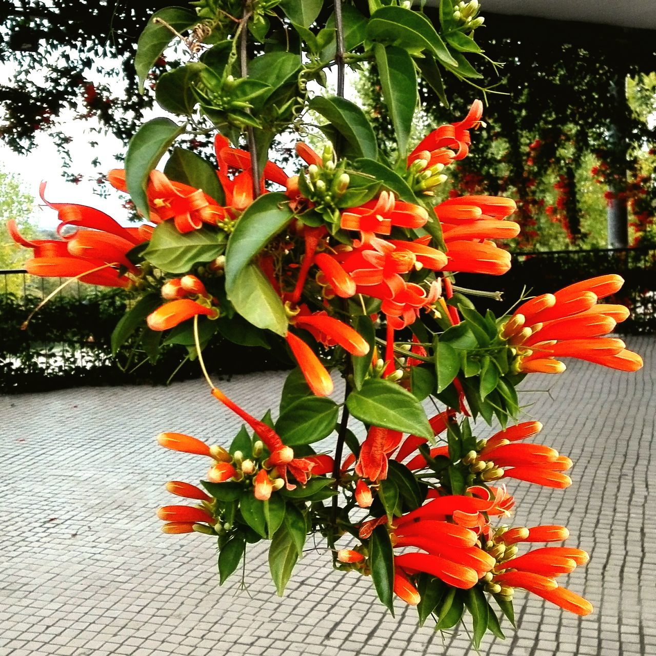 flower, orange color, growth, plant, petal, no people, outdoors, day, freshness, fragility, leaf, beauty in nature, nature, red, flower head, close-up, blooming