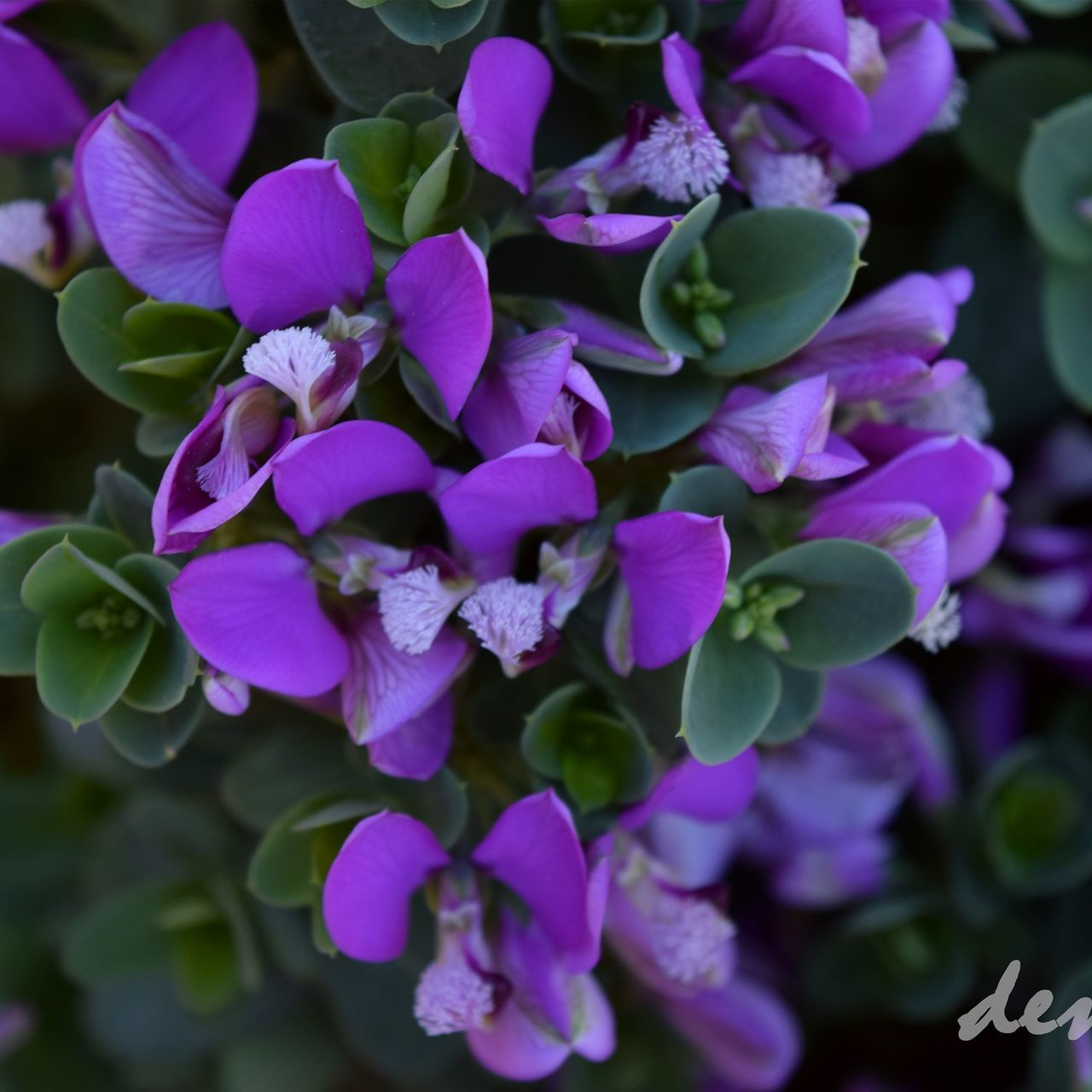 This is your favorite color: purple Flower Purple Nature Beauty In Nature Petal Freshness Close-up Blooming Outdoors First Eyeem Photo