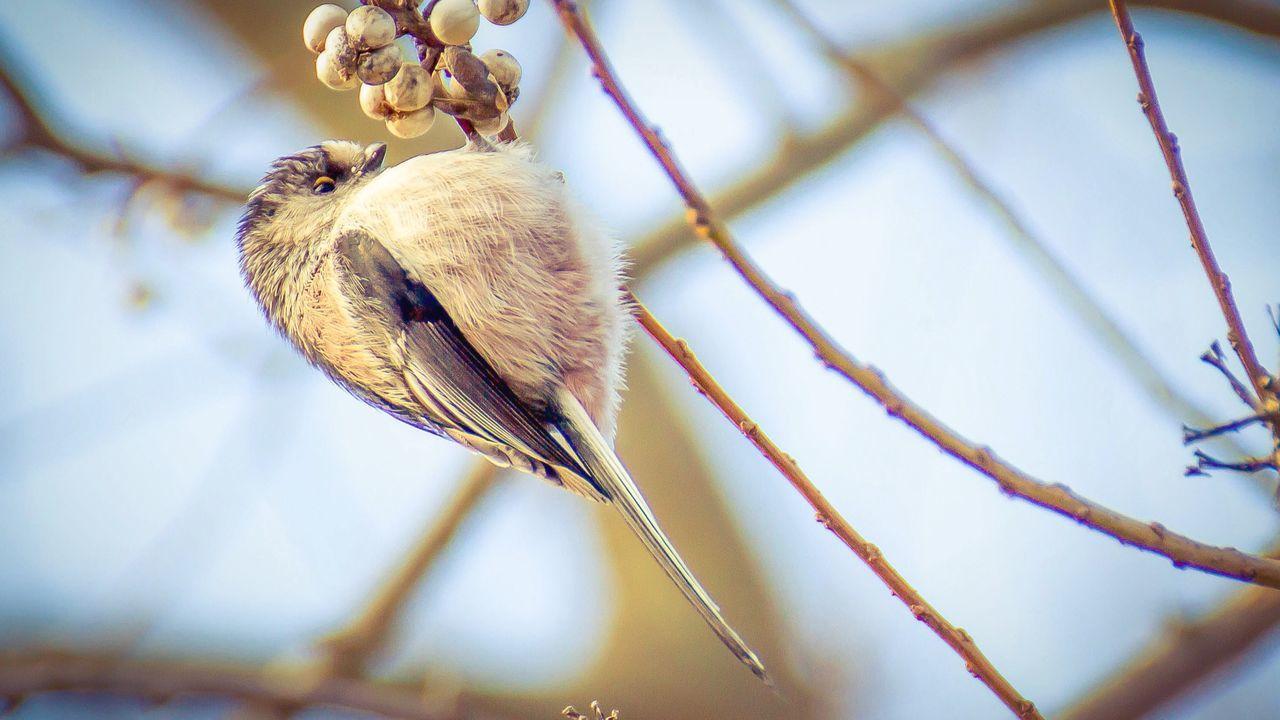 Hello old friend Birds Trees Lunch Time! EyeEm Birds EyeEm Nature Lover Wildlife やきとり