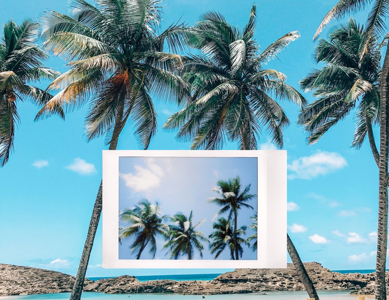 Instant Photo A Day Palm Tree Tree Sky Day Blue Growth No People Beach Tree Trunk Outdoors Sea Cloud - Sky Nature Beauty In Nature Puerto Rico Film Photography Filmisnotdead