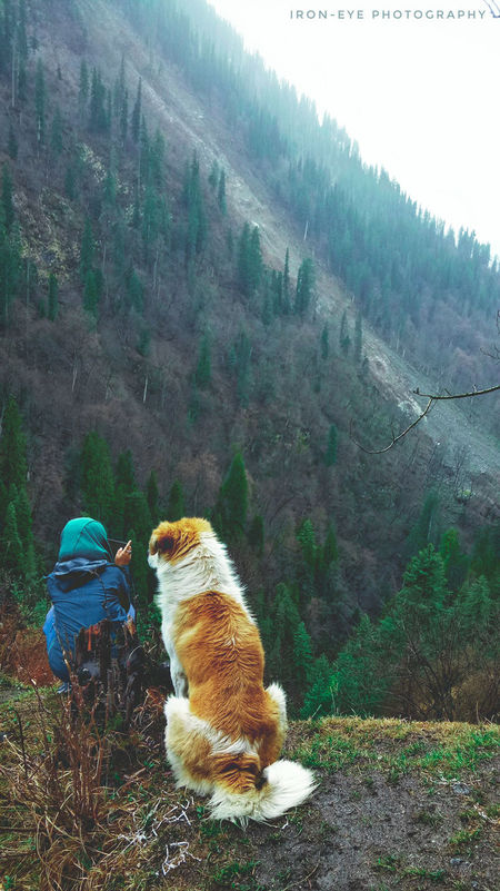 Day Outdoors Agriculture No People Nature 420 Ironeyephotography Beauty In Nature Zen-like Nature Mountain Beautiful Dogslife Dogs Love Intothewild Leisure Activity Forest Photography Beautiful Woman Travel