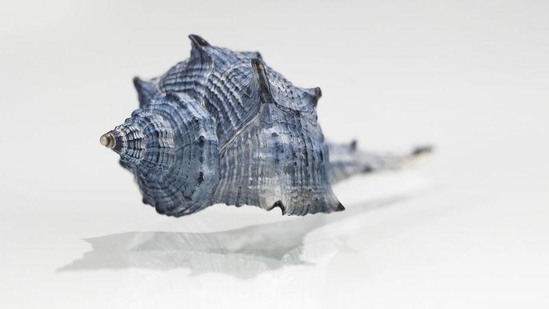 Bibione Conchiglie Giuliodebaronio Macro Photography Reflection In The Glass  Reflections Seashell Shadows