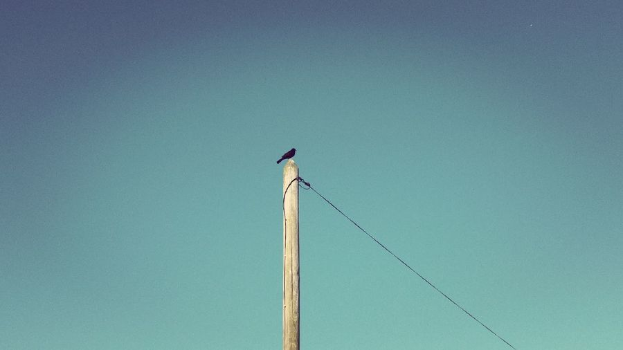EyeEmNewHere Tranquility Bird Animal Wildlife Perching No People Day One Animal Outdoors Blue Nature Animal Themes
