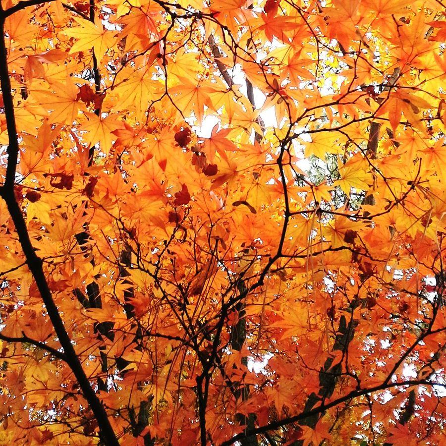 Autumn Leaves Fall Festibal