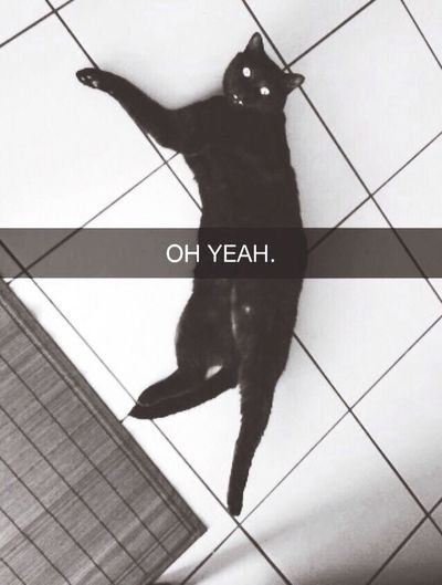 Crazy. Cat
