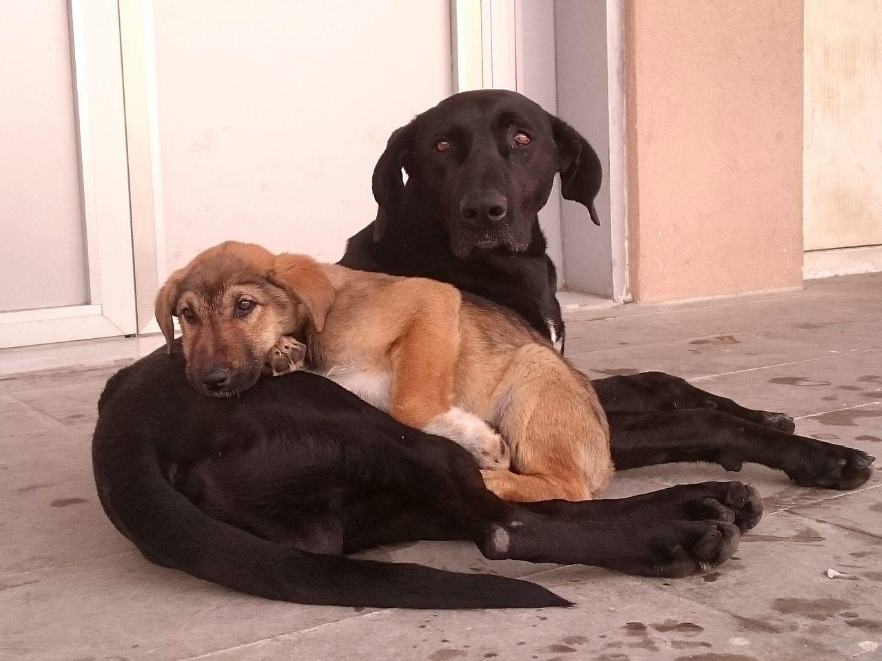 Köpek Yavruköpek Baba Ogul Sonyphotography Sony Xperia Z3 Dog Dogs Dog Love Puppy Puppy Love Outdoors EyeEm Best Shots EyeEm Gallery EyeEm EyeEm Best Edits EyeEmBestPics Eyeemphotography Eyeemphoto