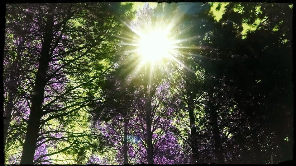 Atmospheric Mood Purple Sky Fall2016 Check This Out Beauty In Nature Awesome_shots Outdoors Fall Leaves Tree Favoritethings My View Capture The Moment Filter Madness TreePorn Filters Are Fun Sunrays Lookingup