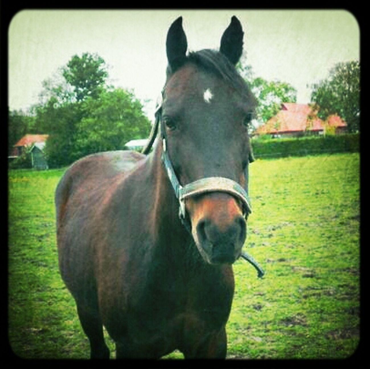 My proud Horse